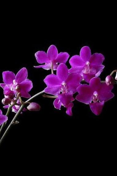 Пурпурный цвет.