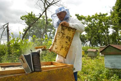 Эмбарго помогает пчеловодам